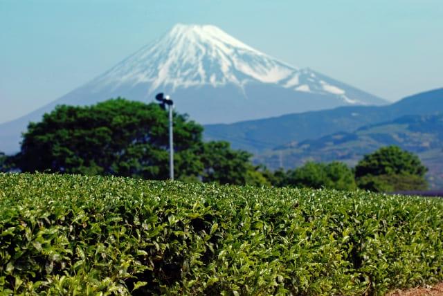 静岡県の車買取査定のおすすめ店舗6選!浜松・富士などで高額査定を目指す方法を紹介!